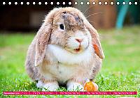 Kaninchen. Putzig, flauschig und geliebt (Tischkalender 2019 DIN A5 quer) - Produktdetailbild 11