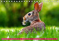 Kaninchen. Putzig, flauschig und geliebt (Tischkalender 2019 DIN A5 quer) - Produktdetailbild 9