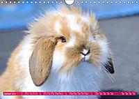 Kaninchen. Putzig, flauschig und geliebt (Wandkalender 2019 DIN A4 quer) - Produktdetailbild 1