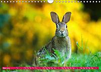Kaninchen. Putzig, flauschig und geliebt (Wandkalender 2019 DIN A4 quer) - Produktdetailbild 3
