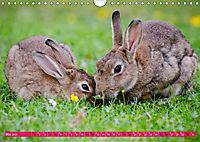 Kaninchen. Putzig, flauschig und geliebt (Wandkalender 2019 DIN A4 quer) - Produktdetailbild 5
