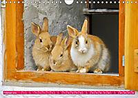 Kaninchen. Putzig, flauschig und geliebt (Wandkalender 2019 DIN A4 quer) - Produktdetailbild 2