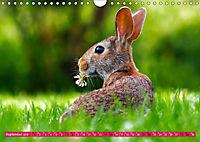 Kaninchen. Putzig, flauschig und geliebt (Wandkalender 2019 DIN A4 quer) - Produktdetailbild 9