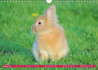 Kaninchen. Putzig, flauschig und geliebt (Wandkalender 2019 DIN A4 quer) - Produktdetailbild 8