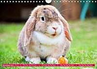 Kaninchen. Putzig, flauschig und geliebt (Wandkalender 2019 DIN A4 quer) - Produktdetailbild 11
