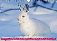 Kaninchen. Putzig, flauschig und geliebt (Wandkalender 2019 DIN A4 quer) - Produktdetailbild 12