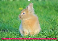 Kaninchen. Putzig, flauschig und geliebt (Wandkalender 2019 DIN A2 quer) - Produktdetailbild 8