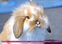 Kaninchen. Putzig, flauschig und geliebt (Wandkalender 2019 DIN A2 quer) - Produktdetailbild 1