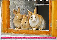 Kaninchen. Putzig, flauschig und geliebt (Wandkalender 2019 DIN A2 quer) - Produktdetailbild 2