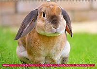 Kaninchen. Putzig, flauschig und geliebt (Wandkalender 2019 DIN A2 quer) - Produktdetailbild 6