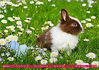 Kaninchen. Putzig, flauschig und geliebt (Wandkalender 2019 DIN A2 quer) - Produktdetailbild 4