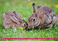 Kaninchen. Putzig, flauschig und geliebt (Wandkalender 2019 DIN A2 quer) - Produktdetailbild 5