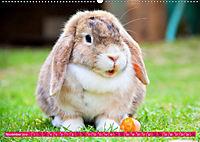 Kaninchen. Putzig, flauschig und geliebt (Wandkalender 2019 DIN A2 quer) - Produktdetailbild 11