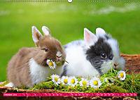 Kaninchen. Putzig, flauschig und geliebt (Wandkalender 2019 DIN A2 quer) - Produktdetailbild 10