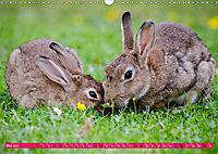 Kaninchen. Putzig, flauschig und geliebt (Wandkalender 2019 DIN A3 quer) - Produktdetailbild 5