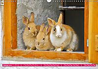 Kaninchen. Putzig, flauschig und geliebt (Wandkalender 2019 DIN A3 quer) - Produktdetailbild 2