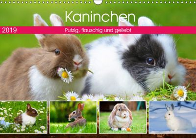Kaninchen. Putzig, flauschig und geliebt (Wandkalender 2019 DIN A3 quer), Rose Hurley