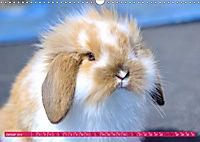 Kaninchen. Putzig, flauschig und geliebt (Wandkalender 2019 DIN A3 quer) - Produktdetailbild 1