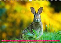 Kaninchen. Putzig, flauschig und geliebt (Wandkalender 2019 DIN A3 quer) - Produktdetailbild 3