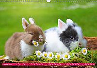 Kaninchen. Putzig, flauschig und geliebt (Wandkalender 2019 DIN A3 quer) - Produktdetailbild 10