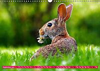 Kaninchen. Putzig, flauschig und geliebt (Wandkalender 2019 DIN A3 quer) - Produktdetailbild 9