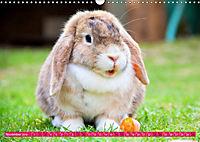 Kaninchen. Putzig, flauschig und geliebt (Wandkalender 2019 DIN A3 quer) - Produktdetailbild 11
