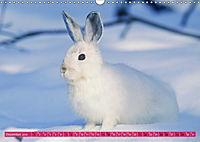 Kaninchen. Putzig, flauschig und geliebt (Wandkalender 2019 DIN A3 quer) - Produktdetailbild 12