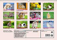 Kaninchen. Putzig, flauschig und geliebt (Wandkalender 2019 DIN A3 quer) - Produktdetailbild 13
