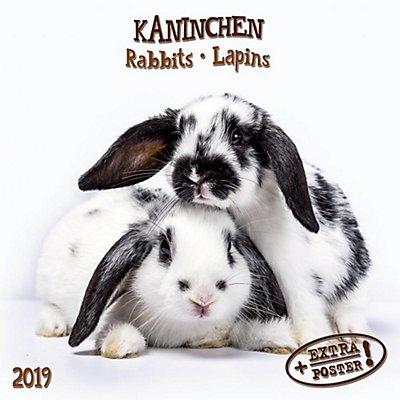 kaninchen rabbits lapins 2019 kalender bei. Black Bedroom Furniture Sets. Home Design Ideas