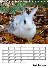 Kaninchen Terminplaner (Tischkalender 2019 DIN A5 hoch) - Produktdetailbild 10