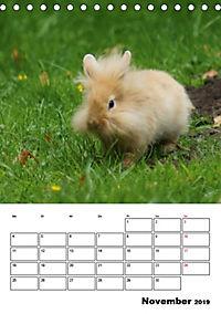 Kaninchen Terminplaner (Tischkalender 2019 DIN A5 hoch) - Produktdetailbild 11