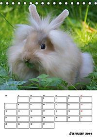 Kaninchen Terminplaner (Tischkalender 2019 DIN A5 hoch) - Produktdetailbild 1