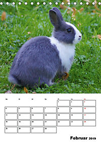 Kaninchen Terminplaner (Tischkalender 2019 DIN A5 hoch) - Produktdetailbild 2