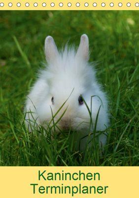 Kaninchen Terminplaner (Tischkalender 2019 DIN A5 hoch), kattobello