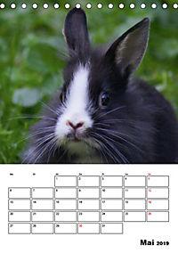 Kaninchen Terminplaner (Tischkalender 2019 DIN A5 hoch) - Produktdetailbild 5