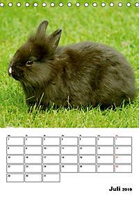 Kaninchen Terminplaner (Tischkalender 2019 DIN A5 hoch) - Produktdetailbild 7
