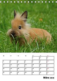 Kaninchen Terminplaner (Tischkalender 2019 DIN A5 hoch) - Produktdetailbild 3