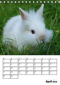 Kaninchen Terminplaner (Tischkalender 2019 DIN A5 hoch) - Produktdetailbild 4