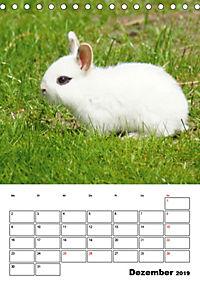 Kaninchen Terminplaner (Tischkalender 2019 DIN A5 hoch) - Produktdetailbild 12