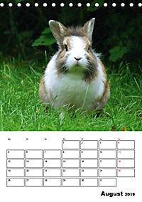 Kaninchen Terminplaner (Tischkalender 2019 DIN A5 hoch) - Produktdetailbild 8