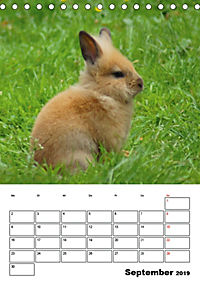 Kaninchen Terminplaner (Tischkalender 2019 DIN A5 hoch) - Produktdetailbild 9