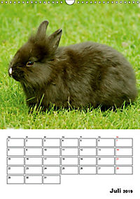 Kaninchen Terminplaner (Wandkalender 2019 DIN A3 hoch) - Produktdetailbild 7