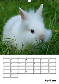 Kaninchen Terminplaner (Wandkalender 2019 DIN A3 hoch) - Produktdetailbild 4