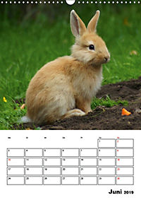 Kaninchen Terminplaner (Wandkalender 2019 DIN A3 hoch) - Produktdetailbild 6