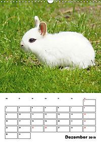 Kaninchen Terminplaner (Wandkalender 2019 DIN A3 hoch) - Produktdetailbild 12