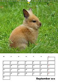 Kaninchen Terminplaner (Wandkalender 2019 DIN A3 hoch) - Produktdetailbild 9
