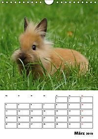 Kaninchen Terminplaner (Wandkalender 2019 DIN A4 hoch) - Produktdetailbild 3