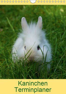 Kaninchen Terminplaner (Wandkalender 2019 DIN A4 hoch), kattobello