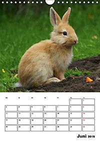 Kaninchen Terminplaner (Wandkalender 2019 DIN A4 hoch) - Produktdetailbild 6