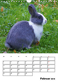 Kaninchen Terminplaner (Wandkalender 2019 DIN A4 hoch) - Produktdetailbild 2